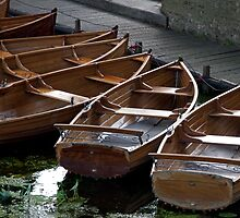 Rowing Boats For Hire by rogerash
