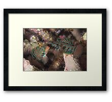 Psychedelic Mandarinfishes Fighting Framed Print