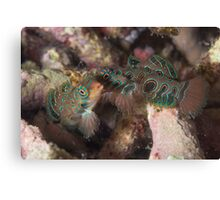Psychedelic Mandarinfishes Fighting Canvas Print