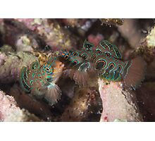 Psychedelic Mandarinfishes Fighting Photographic Print