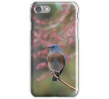 Western Bluebird  iPhone Case/Skin