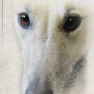 The eyes of a greyhound by Christina Brundage