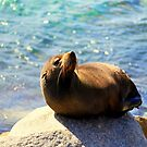 Seal Sunbathing by Evita