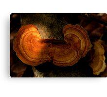 Fungi along the Gondwana Rainforest walk Canvas Print