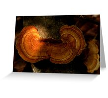 Fungi along the Gondwana Rainforest walk Greeting Card