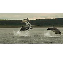 Triple breach. Bottle nose dolphins Photographic Print