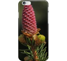 Pine Cone Babies iPhone Case/Skin
