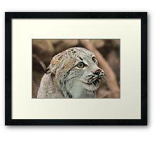 Angry Bobcat Framed Print