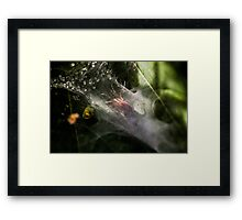 Spider In The Shadows Framed Print