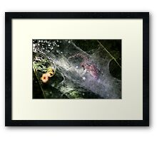 Spider With Ant Prey Framed Print