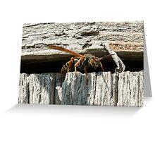 Big Eyed Wasp Greeting Card
