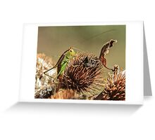 Insect and Leaf Greeting Card