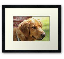 Love Golden Retrievers Framed Print