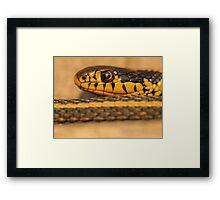 Gardner Snake Closeup Framed Print