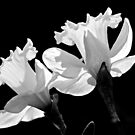 Purity by NatureGreeting Cards ©ccwri