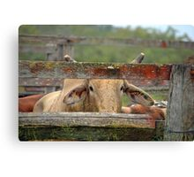 BULL AT A GATE Canvas Print