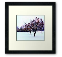 Winter Apples Framed Print