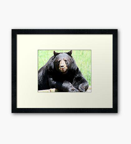 Ours noir Framed Print