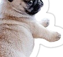 Pug Puppy Sticker