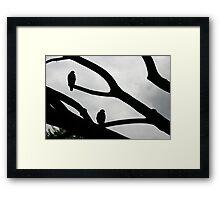 Two Hawks Framed Print