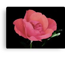 A Rose Is A Rose Is A Rose Canvas Print