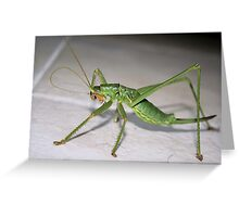 Katydid Bush Cricket Greeting Card