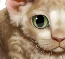 Cataclysm - Devon Rex Kitten Classic Sticker