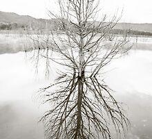 tree at the lake by ketut suwitra