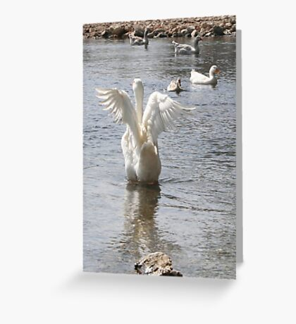 White Duck Flapping Wings on Water Greeting Card