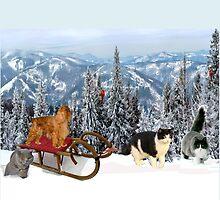 Sledding with Cats by Karen Del Pellegrino