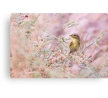 Adult Willow Warbler (Phylloscopus trochilus)  Canvas Print
