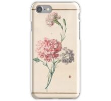 Circle of Madeleine Françoise Basseporte 1701-1780 Bizarre Carnations.  iPhone Case/Skin