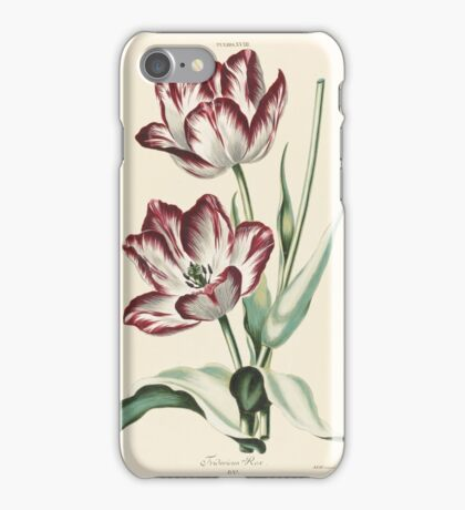 Christoph Jakob Trew, Tulips iPhone Case/Skin