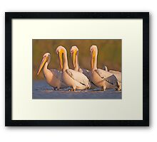 Pelicans in the water Photographed in Ein Afek Nature Reserve, Framed Print