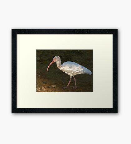 natural beauty - belleza natural Framed Print
