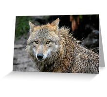 The Wolfess Greeting Card
