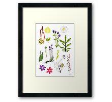 Herbarium / Herbier #2 Framed Print