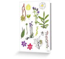 Herbarium / Herbier #2 Greeting Card