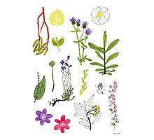 Herbarium / Herbier #2 Photographic Print