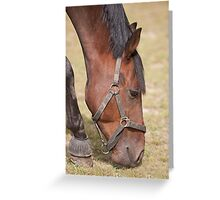 Close up of a Thoroughbred Horse Grazing Greeting Card