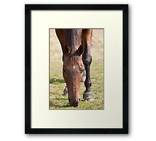 Thoroughbred Horse Grazing Framed Print