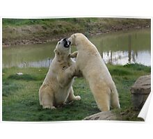 Polar Bears Play fighting 2 Poster