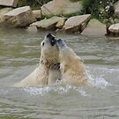 Polar Bears Playing in The Water by LoneAngel