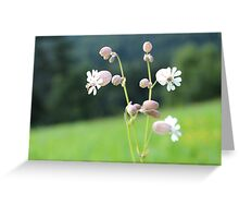 Princesses On A Field Greeting Card