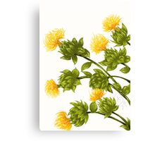 Safflower Canvas Print