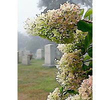 In rememberance Photographic Print