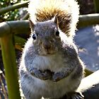 This nut is mine!!!! by Sue Gurney