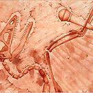 Rockaeopteryx by Bart Castle