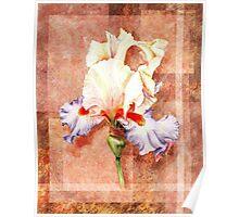 Gorgeous Iris Decorative Painting Poster
