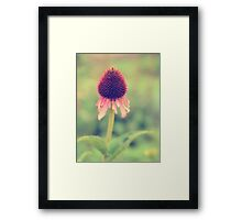 Beauty Fading ~ Flower. Framed Print